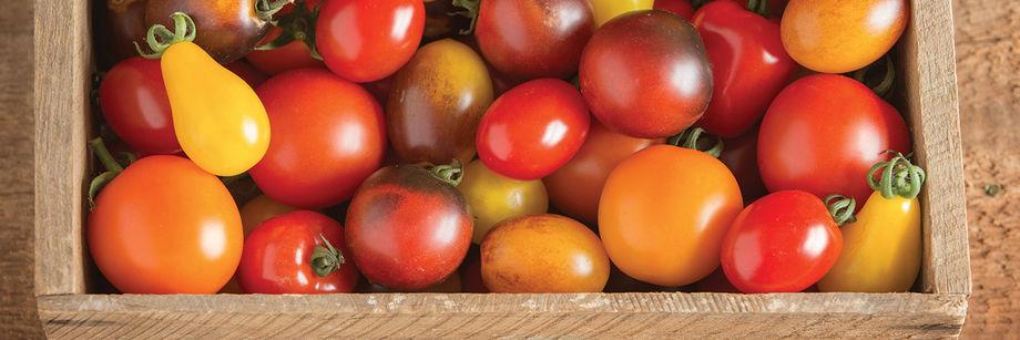 Sugo di pomodorini freschi